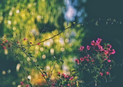 Snapseed(4)